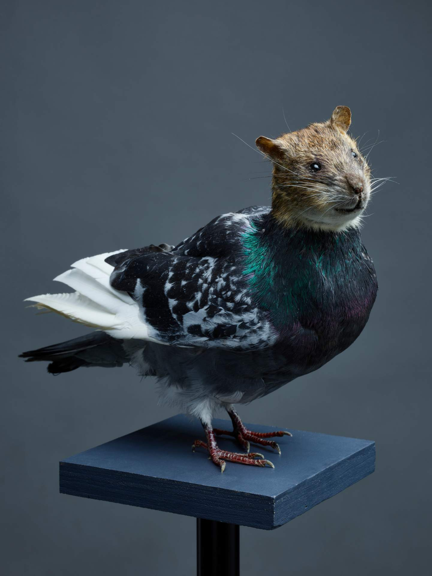 Untitled (Rat with Wings) from the work Stadtluft